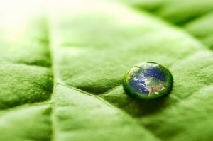 Green vs. Conventional Hardwood Flooring